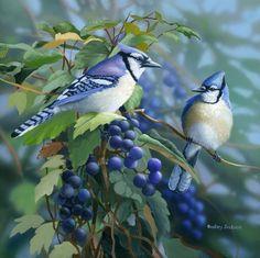 Állatok: madarak madarak