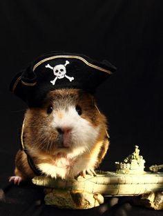 Talk like a Piggy Pirate Day. Wheeek Wheeek Wheeek! (via Mara Ann | Papua Piig & Friends)