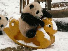 Disgustingly Adorable Panda Daycare Seeks to Save Endangered Species