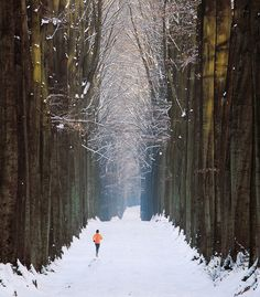 Running in the Cathedral    ::    Somewhere close to Brussels, Belgium, on a snowy afternoon.      by By Vainsang