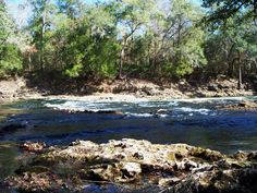 Chipola River - look and Tremble