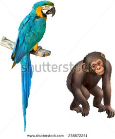 Vector illustration of baby monkey Gorilla, Colorful blue parrot macaw isolated on white background - stock vector