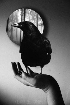 bless the lord by cleamma on DeviantArt The Crow, Crow Art, Raven Art, Beautiful Creatures, Choucas Des Tours, Imagenes Dark, Blackbird Singing, Quoth The Raven, Lady Godiva