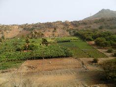 Cultures dans une vallée... centre de Santiago - Cap Vert