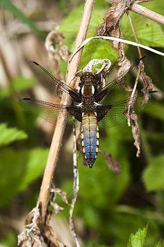 Nature - Photographing Dragonflies & Damselflies