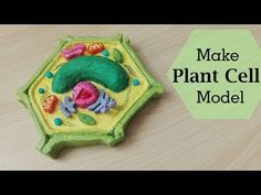 Use this step-by-step guide to build an awesome plant or animal cell model on a budget. Whether you're making this for science class, a science fair, or a homeschool project, your cell model is sure to impress! Plant Cell Project Models, 3d Plant Cell Model, Plant Cell Structure, Animal Cell Project, 3d Animal Cell Model, 3d Cell Model, Biology Projects, Biology Art, Science Projects