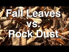 Ever wonder what Rock Dust is made of? Well we submitted samples of Rock Dust and Fall Leaves to the garden to see what they are made of. The trace elements and mineral results are quite interesting. See how Leaves stack up against Rock Dust!
