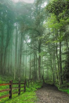 Country Road along Blue Ridge Parkway, North Carolina. Oh how I miss the Blue Ridge Parkway and all it's magnificent trails! Blue Ridge Parkway, Beautiful World, Beautiful Places, Beautiful Forest, Back Road, Walk In The Woods, Pathways, Beautiful Landscapes, The Great Outdoors