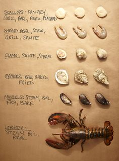 Use this shellfish cheat sheet to help determine what's fresh next time you're at the seafood counter. Not that I'll be buying any of this ever, especially in Nebraska. Fish Recipes, Meat Recipes, Seafood Recipes, Fish Dishes, Seafood Dishes, Cooking 101, Cooking Recipes, Pescatarian Diet, Food Charts