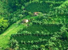 The Coffee Cultural Landscape of Colombia Visit Colombia, Colombia Travel, Colombia Country, Where To Go, Glamping, Countryside, Scenery, Places To Visit, Culture