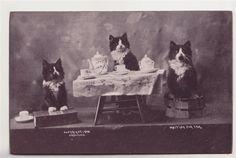 cat tea party