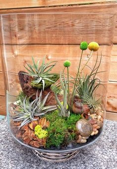 Great Air Plant Terrariums Ideas for Your Stunning Home / Air Plant Terrariums 25 Great Ideas
