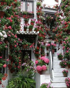 15 outdoor steps decorated with planters and flower pots Welcome! We have included below some ideas of the brightest outdoor steps with planters and flower pots, which you can use to inspire you . Beautiful Gardens, Beautiful Flowers, Beautiful Places, Outdoor Steps, Balcony Garden, Balcony Ideas, Dream Garden, Colorful Flowers, Container Gardening