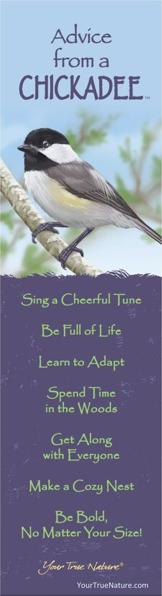 """Growth Advice from a Chickadee: """"Learn to Adapt!"""". Your True Nature"""