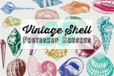 Check out Vintage Sea Shell Photoshop Brushes by Robyn Gough Designs on Creative Market, digiscrap, digital scrapbook, digital design, graphic design