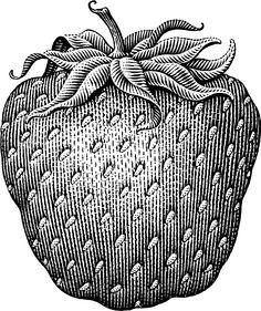 Strawberry — by Michael Halbert