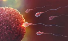 Intrauterine Insemination (IUI) is a fertility treatment that involves placing sperm inside a woman's uterus to facilitate fertilization. Know more about IUI treatment. Precession Of The Equinoxes, Causes Of Infertility, Reproductive System, Plant Protein, Pregnancy Stages, Pregnancy Foods, Pregnancy Months, Women Health, Human Body