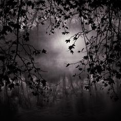 Eye Of The Night by Ebru Sidar. S)