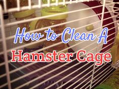 How to Clean a Hamster Cage - Dwarf Hamster Blog