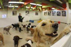 ADOGO Doggy Daycare