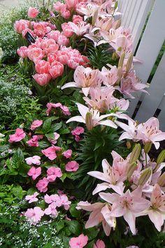 tulips, lilies, impatiens and diamond frost euphorbia