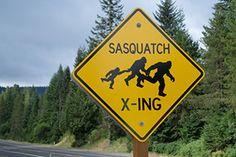 Comprehensive Car Insurance Coverage and Sasquatch