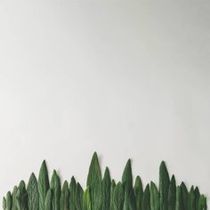 forest treeline made of green leaves on bright background minimal