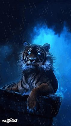 Tigris az esőben.gif
