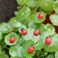 100Pc Colorful Mini Home Decor Kid Toys DIY Ladybird Ladybug potted decorative home decor   garden decoration