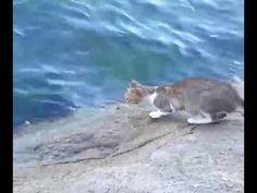 Katze fängt Fisch mit einer unglaublichen Reaktion - YouTube