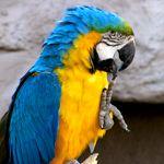 Perches For Parrots