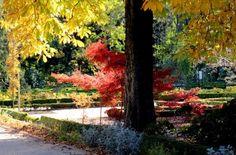 Los 14 mejores jardines botánicos de España. Los jardines botánicos españoles atesoran una rica biodiversidad vegetal para disfrutar y conservar