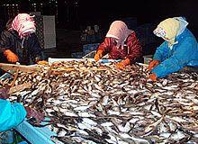 魚醤ってなんなのか?日本にもある魚醤。世界各地ある魚醤との違いや使われ方の違いなどなどいろいろ気になるなあ。