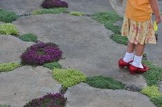"Wonderful idea: Plant thyme in the cracks of flagstone. It makes for a pretty ""ground"" art/sensory garden."