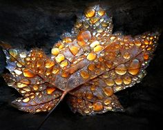 Fall maple leaf with morning dew - Autumn Ethereal by alexandre-deschaumes Dew Drops, Rain Drops, Autumn Art, Autumn Leaves, Autumn Forest, Fall Trees, Alexandre Deschaumes, Mabon, Samhain