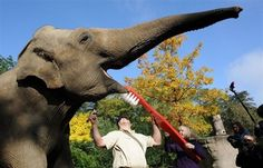 A elephant getting its teeth brushed....I think this takes away my excuses not to brush my dog's teeth!