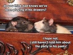 Rat playground in dravers