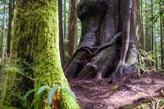 Image result for RED CREEK FIR TRAIL Hiking Trails, Plants, Red, Image, San Juan, Plant, Walking Paths, Planets