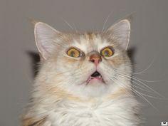 cat at a loss | http://unusual-cats.com/cat-at-a-loss/