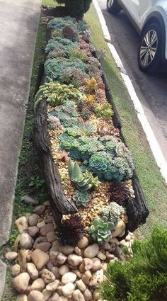 steingarten Nice cactus & succulent strip along driveway Water Garden Feature - How To Save On The P Succulent Landscaping, Succulent Gardening, Front Yard Landscaping, Succulent Plant, Container Gardening, Succulent Garden Ideas, Landscaping Ideas, River Rock Landscaping, Urban Gardening