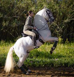 chicas escort santiago equitación