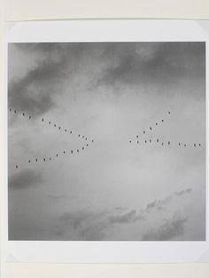 Birds in Flight III - Eva Stenram, 2006-07. In the series 'Birds in Flight', Stenram has digitally manipulated photographs of birds so that their patterns of flight are curious and surprising.