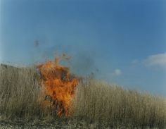Find the latest shows, biography, and artworks for sale by Rinko Kawauchi. Shooting primarily with a six-by-six format camera, Rinko Kawauchi captures natura… Color Photography, Amazing Photography, Rinko Kawauchi, Earth Wind & Fire, Mystique, Famous Photographers, Contemporary Photography, Perfect World, Portrait