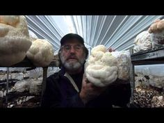 Paul Stamets with Lion's Mane - Check out wise Lions Mane (Hericium erinaceus) flourishing in Fungi Perfecti grow rooms.