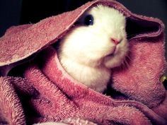 Bunny peeks out from under a towel - May 31, 2012