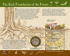 Island Center Forest - Interpretive Signs