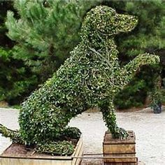 French Style Garden Topiary Animals.