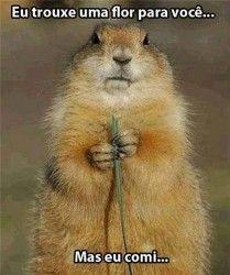 Eu trouxe uma flor para você