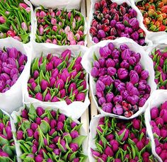 Purple Tulips... Reminds me of our wedding!