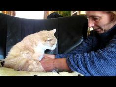 """Giving my 18 year old cat Garfield """"elderly care"""", so he doesn't become a """"Smelly Cat"""" - YouTube"""